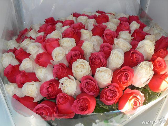 Розы плетистые фото отзывы Купить плетистые розы